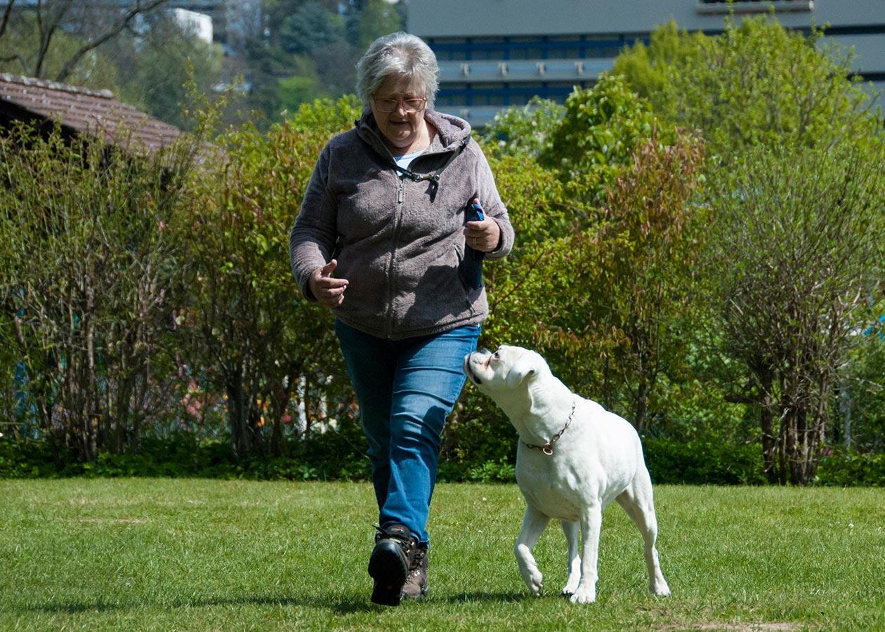 Aktive Hunde